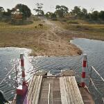 Google crossing the Boteti River by ferry