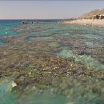 Coral reef in Eilat.
