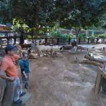 StreetView enters petting zoo