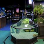 Aquarium Adventure Columbus (StreetView)
