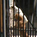 Angry dog (StreetView)