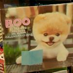 "Boo - ""The World's Cutest Dog"""