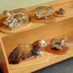 Taxidermied animals