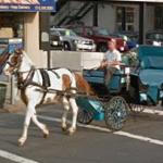 Horse drawn vehicle