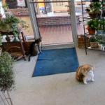 Flower Shop Cats