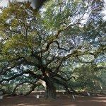 Angel Oak (StreetView)