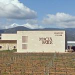 Macià Batle's vineyards