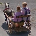 Amish girls drive their buggy