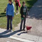 Dog Wearing A Sweater (StreetView)