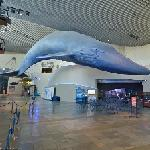 Blue whale model at Aquarium of the Pacific