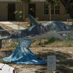 Shark (Cedar Key School mascot)