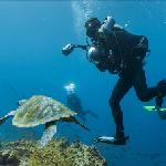 Google Maps Underwater - Turtle and SCUBA divers
