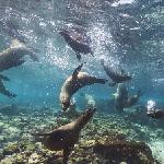 Google Maps Underwater - Galápagos sea lions