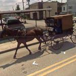 Horse And Amish Buggy