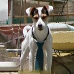 Dog wearing tie