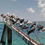 Seabirds in Tern Island