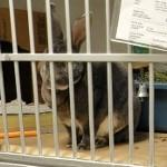 Bunny in the animal shelter (StreetView)