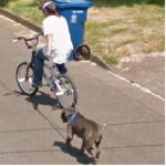 Bicyclist Pulling A Dog
