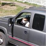 Dog Thinks It's Driving!