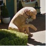 Dog Statue (StreetView)