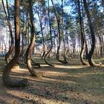 Crooked Forest (StreetView)