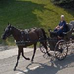 Amish buggy (StreetView)