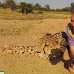 Man posing with Cheetah