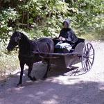 Mennonite Horse Drawn Cart