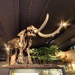 Educational display on a mastodon