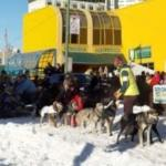 Start of the 2014 Iditarod Trail Sled Dog Race