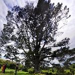 Bag End Party Tree - Bilbo Baggins birthday (StreetView)