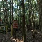 Aokigahara - Suicide Forest or Sea of Trees (StreetView)