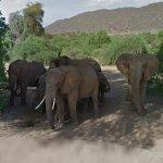 African Elephant Family (StreetView)