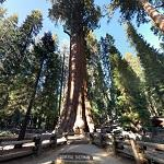 General Sherman (StreetView)