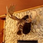 A Moose on the wall... (StreetView)