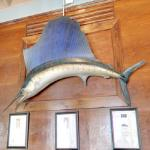 Marlin or Sailfish... do you know?