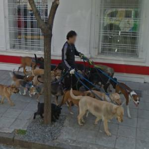 Dog walker (StreetView)