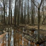 Battle Creek Cypress Swamp