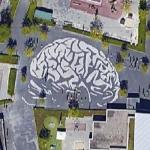 Brain in a school yard