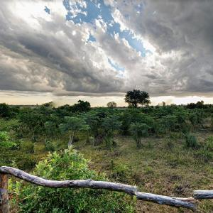 Liwonde National Park (StreetView)