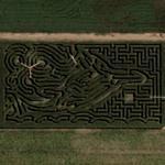 Fallon maze