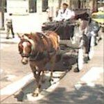 Horse and Carriage (StreetView)