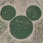Mickey's forest (Google Maps)
