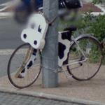 Bicycle Cow (StreetView)