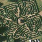 Maze at Escot Gardens