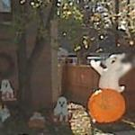 Halloween Decorations (StreetView)