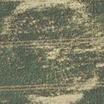 Crop circle remains (Google Maps)