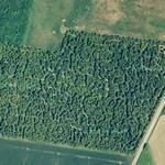 Samsø Labyrinten - The largest permanent tree labyrinth in the world (Google Maps)