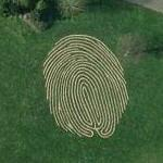 'Fingermaze' (Google Maps)