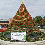 Christmas Tree (StreetView)